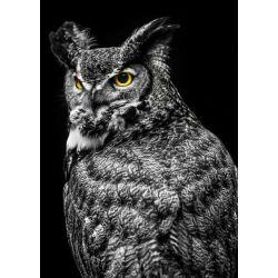 """""""Wisdom Owl II"""" de Ronin"""