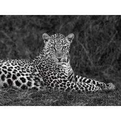 """Leopard Portrait"" de Ortega Xavier"
