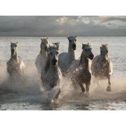 """Horses Landing at the Beach"" de Llovet Jorge"