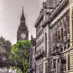 """London Tree"" de Franck Assaf"