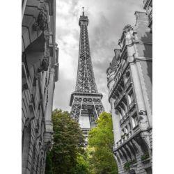 """""""Paris my Love"""" de Franck Assaf"""